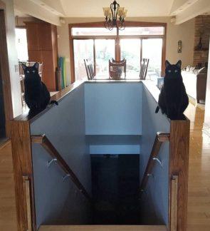 Guardian Cats