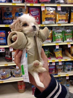 Jedi Puppy