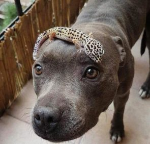 A cute dog with a lizard on it's head