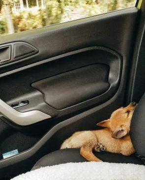 Car Doggo
