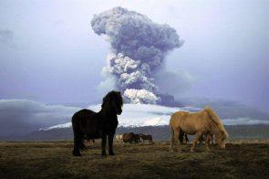 Eruption Horses