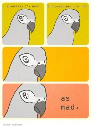 mad bird