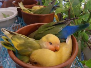 Potted Birds