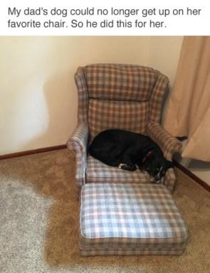 Elderly Dog Chair
