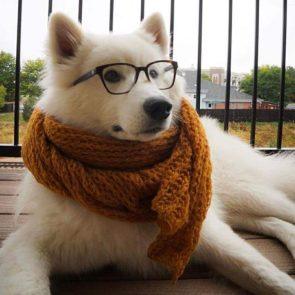 Hipster Doggo