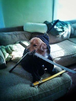 sword dog.jpg