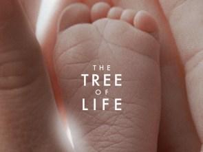 Tree of Life foot.jpeg