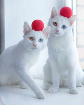 Ball Cats