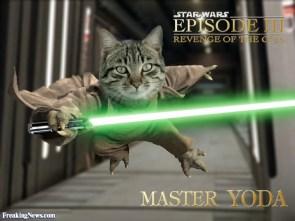 Revenge of the cats.jpg