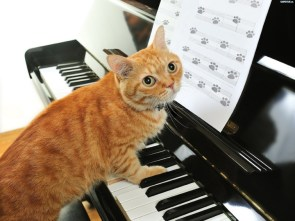 piano cat with sheet music
