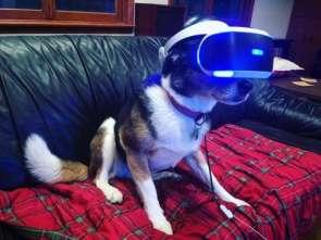 VR Dog.jpg
