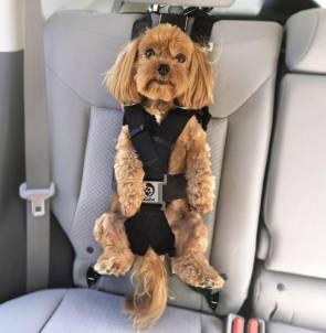 car puppy.jpg