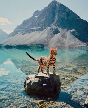 majestic lake cat