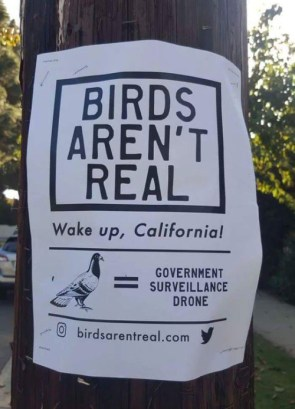 birds aren't real.jpg