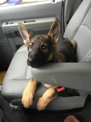 puppy rider.jpg