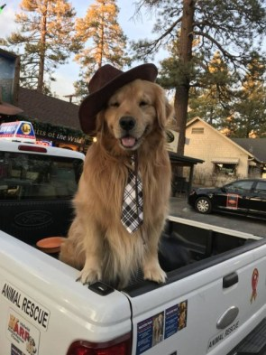 fancy dog.jpg