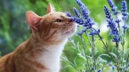 flower smelling cat