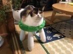 leggy cat