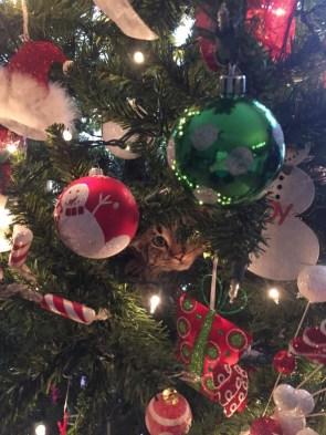 christmas tree cat.jpg
