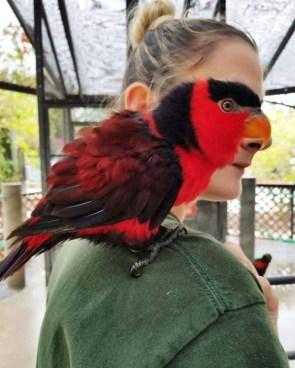 Bird Face.jpg