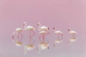 flamingo birds.jpg