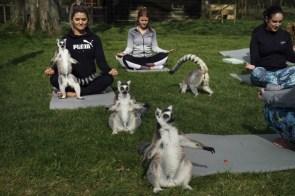 lemer yoga.jpg