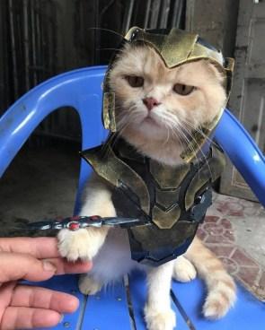 perfectly balanced cat.jpg