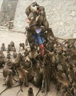monkey mob.jpg