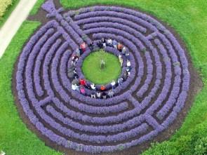 lavender maze.jpg
