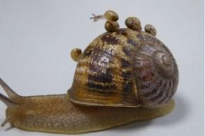 Love for snail