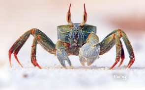 sandy crab.jpg