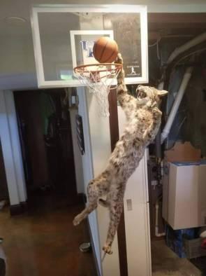cat basketball