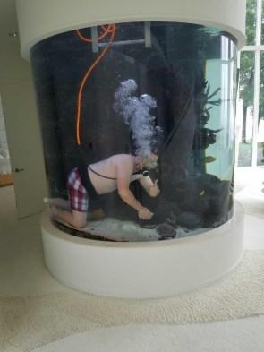 home aquarium diver