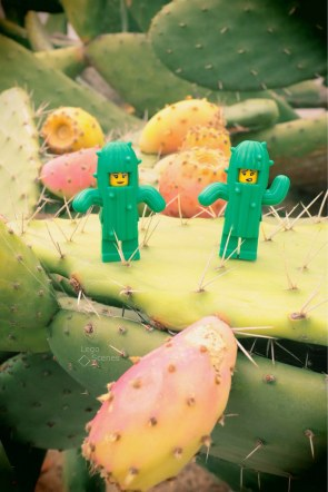Spine lovely life #LegoScenes #CenasLego #lego #legography #legomacro #macro #minifigures #minifigs #canon #summer #cactus #spines #cactusgirl #cactusfigs #figs #Opuntiaficusindica #ficus