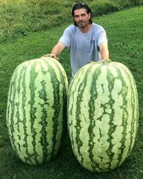 big mellons