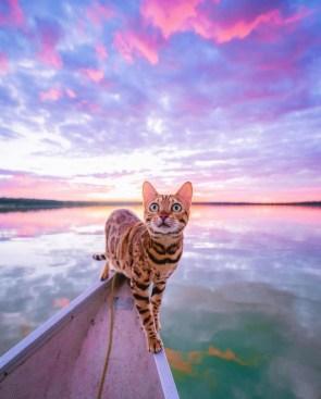 boat kat