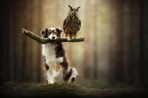 a dog and his owl