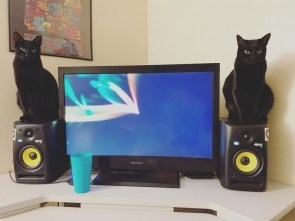 stereo speaker cats