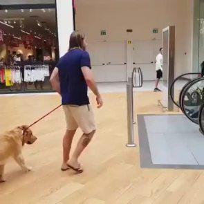 Dog Escalator