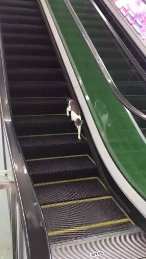 A Long Way Down GIF by funnywideface