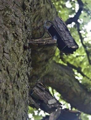 hidden camera tree