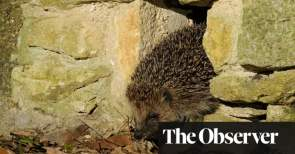 Prickly business the hedgehog highway that knits a village together