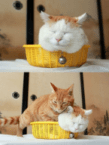 cats and baskets