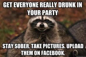 no party like a raccoon party
