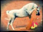 Die Pony Die!