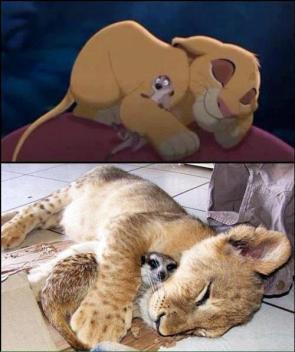 Timon & Simba IRL