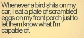 bird shit revenge