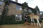 Giraffe in a House