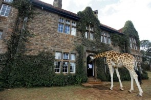Giraffe in a House