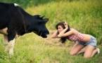Bull vs. girl